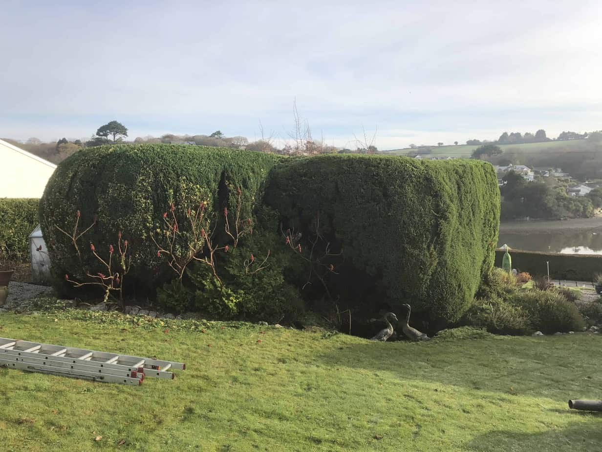 Hedge-trimming-devoran