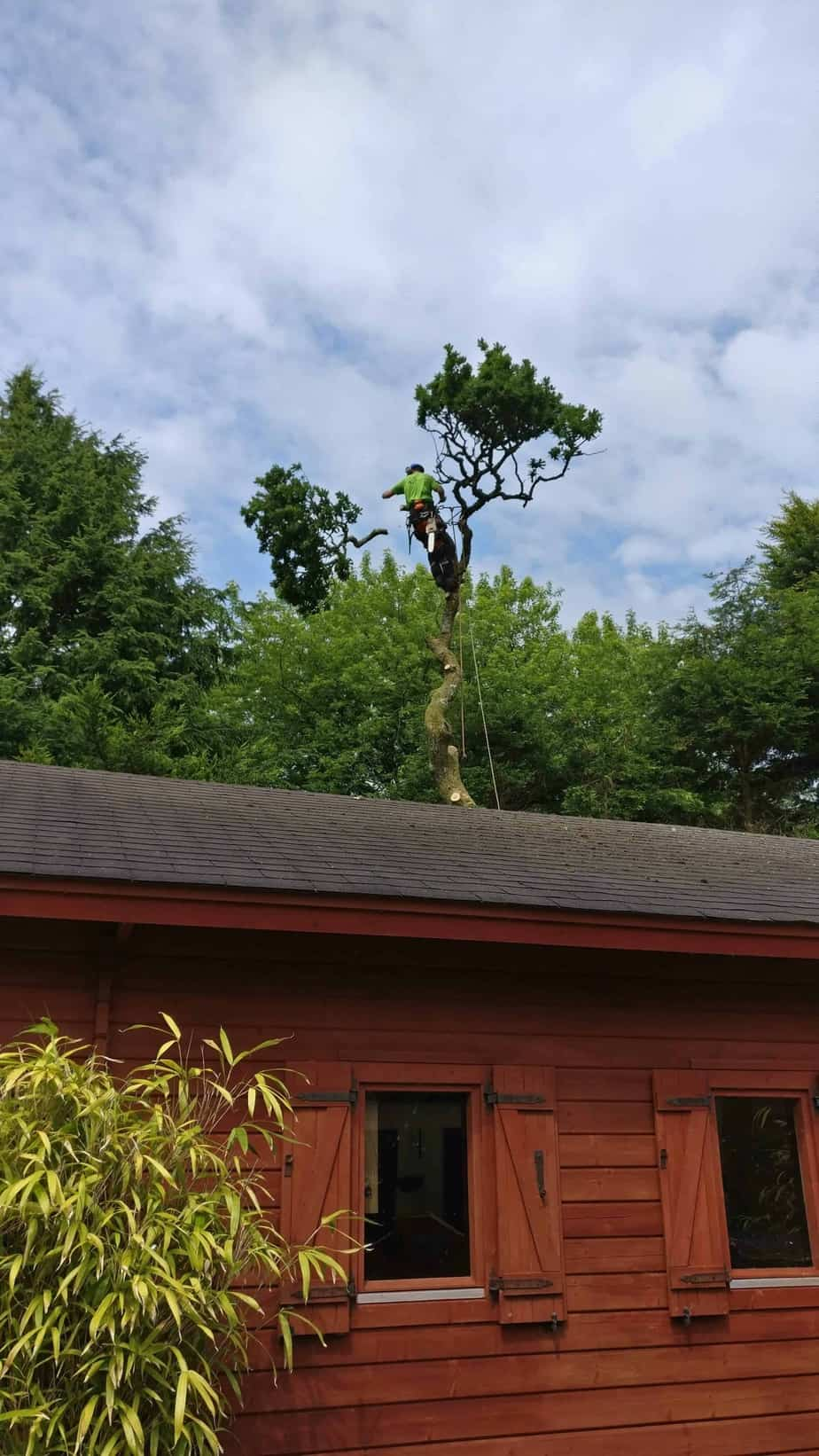 Oak-removal-st-columb