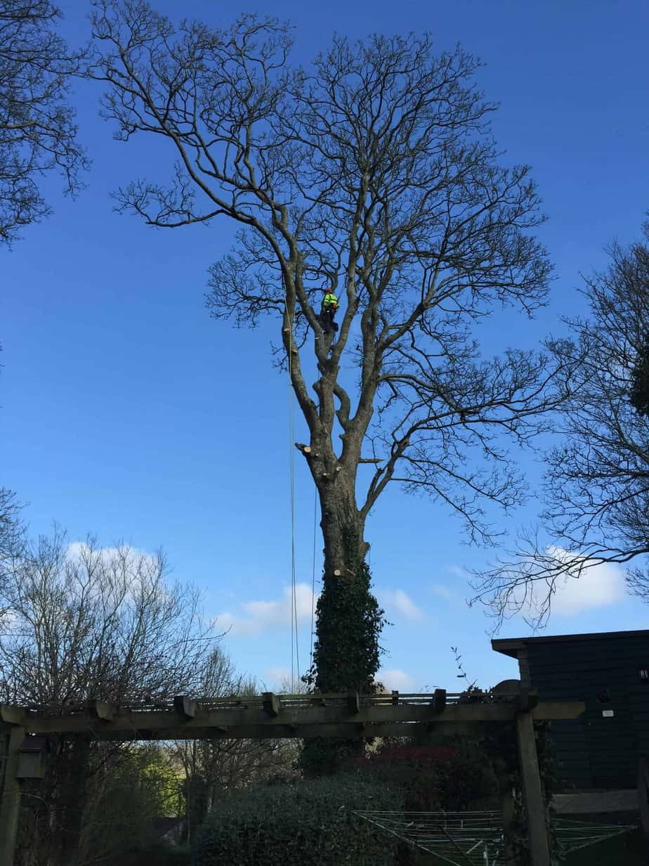 sycamore-removal-st-columb-2